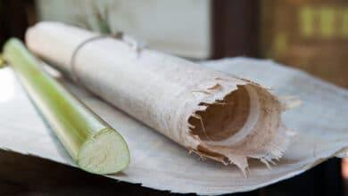 Photo of Le papyrus : tous les secrets de cette fibre