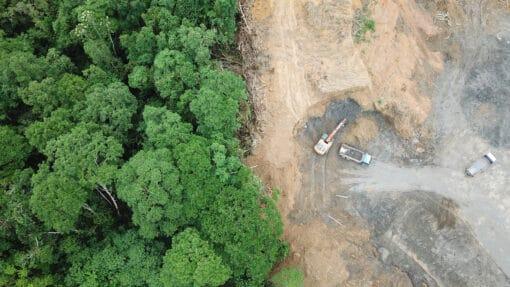Déforestation : futures plantations de palmiers à huile