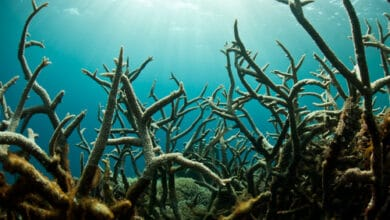 Photo of L'acidification des océans, ce risque planétaire