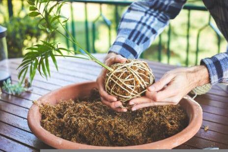 Une sphère végétale