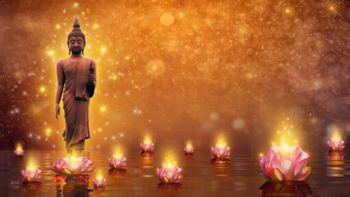 Cette plante est un symbole de la religion bouddhiste