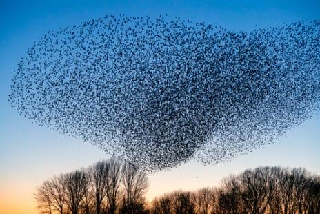 Le murmure des oiseaux