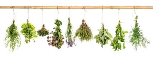 Liste en image des herbes de Provence