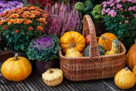 Les magnifiques couleurs chatoyantes de l'automne