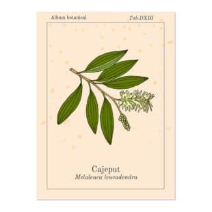 Une plante médicinale