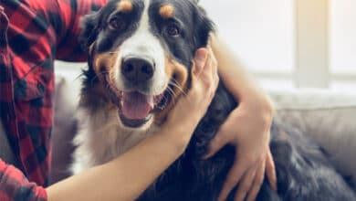 Un chien entourré par les bras de son maître