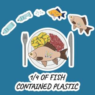 Chaine alimentaire : l'homme mange le poisson et celui-ci mange le plastique