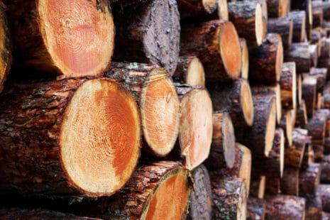 Grumes de bois issues de forêts gérées durablement