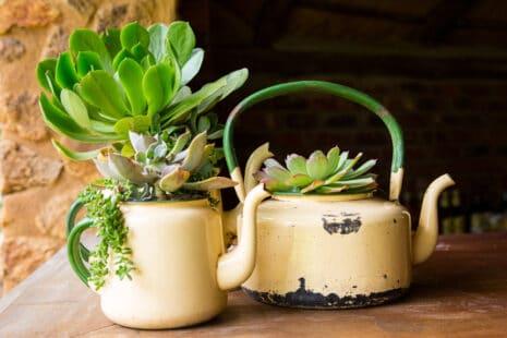 Des pots de fleurs détournés