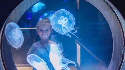 Petite fille observant des méduses dans un aquarium