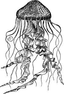 Un dessin en noir et blanc de méduse