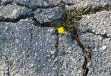 Petite fleur jaune sortant du bitume