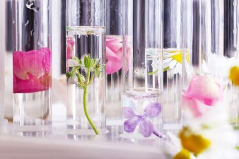 Tubes à esai contenant des plantes ou fleurs en train de macérer dans des liquides