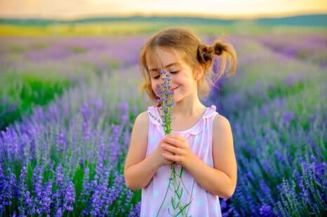 Petite fille avec des couettes sentant un brin de lavande, avec en arrière plan un champs de lavande