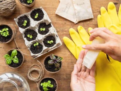 Que faire pousser en avril dans votre potager ? Semer des graines en godet ou barquette
