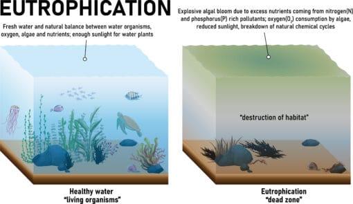 Schéma de l' eutrophisation