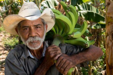Fermier ayant une petite exploitation de bananes équitables