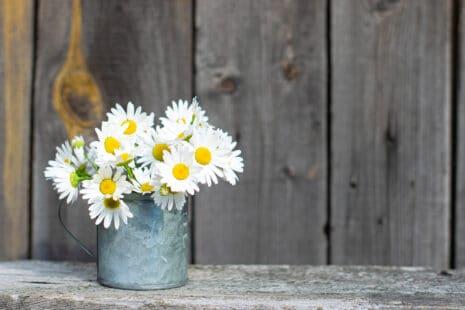 Marguerites coupées dans un pot en métal, ambiance champêtre sur fond de bois