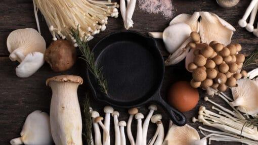 Nombreux champignons variés : Champignons Portobello, Champignons, Shimeji, Chambres Enoki