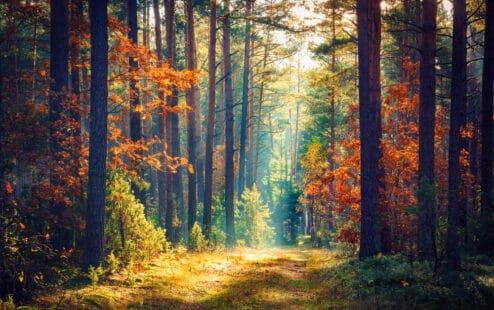Forêt automnale, rayon de soleil dans la clairière