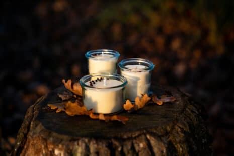 Trois bougies à la cire de soja dans des verres transparents, posées sur une souche d'arbre
